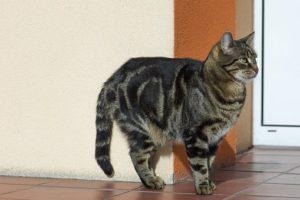 cat-1805310__340